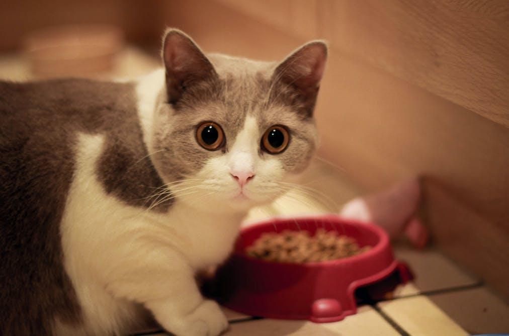 Cat Paw Ground Next To Food