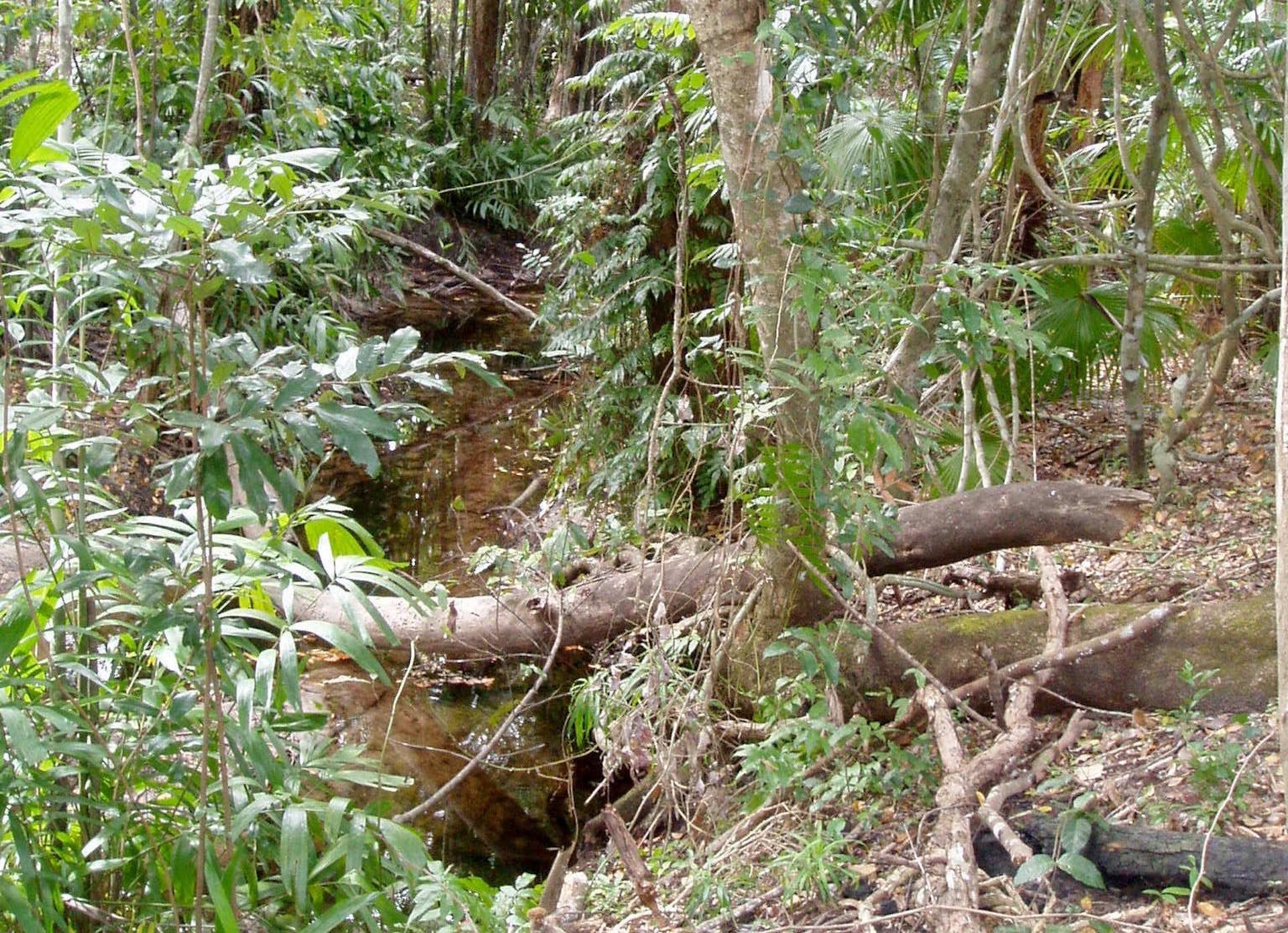 Image of The source of a sacred freshwater stream at Djiliwirri
