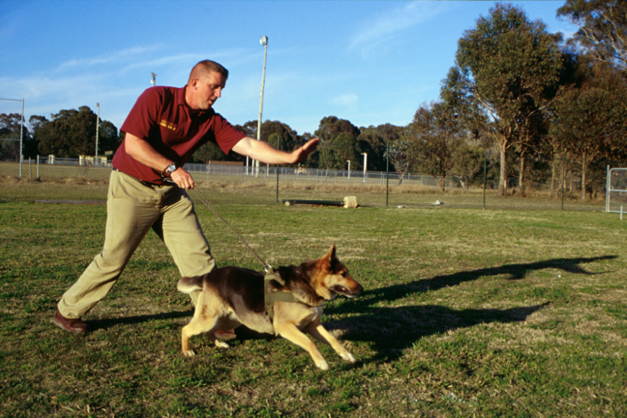 Picture of a dog being taught to retrieve